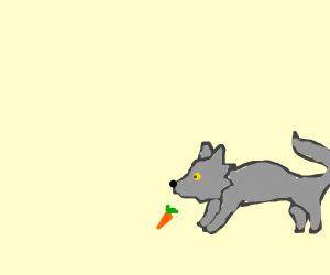 wolf sniffs smol carrot