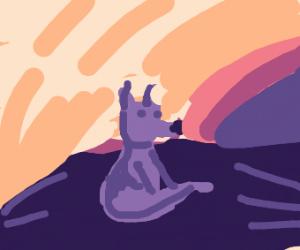 Fox looks at the sun.