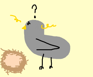 Grey bird confused