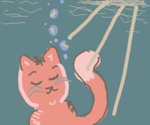 Cat in the sun underwater