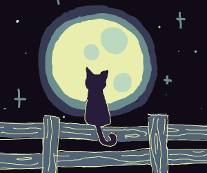 Cat standing in fence during the night