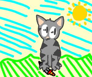grey kitten sitting on a knife
