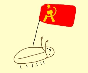 A communist beetle