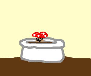 cute little mushroom in a pot