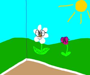 Nerdy wallflowers