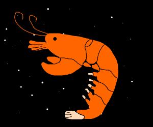 Shrimp in Space