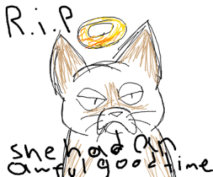 Grumpy Cat has died. How awful.