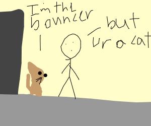 Cat bouncer