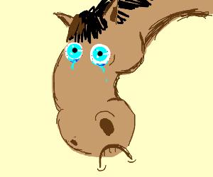 sad horse time.