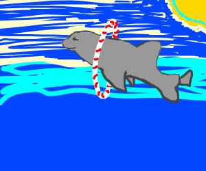 Dolphin going through portals