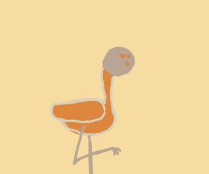 Flamingo with Coconut Head