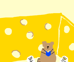 Bear study in giant cheese