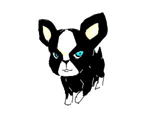 a cute black doggy
