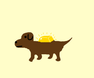 Gold on a dog