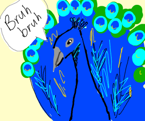 """peacock goin like """"bruh bruh"""""""