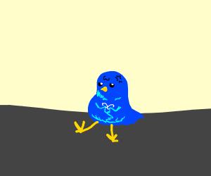 Blue bird sitting on floor bored