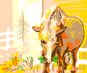 A horse eating lettuce
