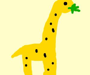 giraffe eating weed