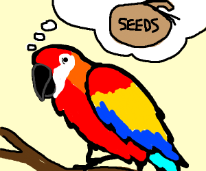 Parrot thinking of Seeds
