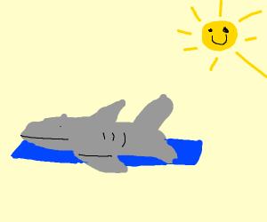 suntanning shark
