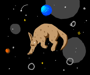 Aardvark lost in space