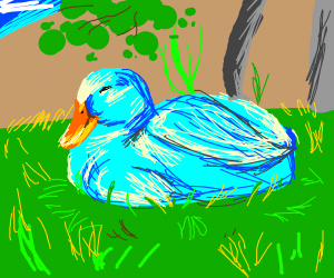 Sleeping Blue Duck