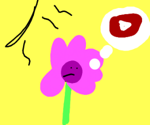 Flower thinks of YouTube while under the sun.
