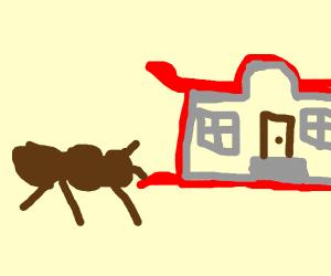 Ant School
