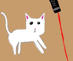 Kitten chasing laser