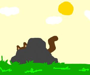 cat behinfd a rock