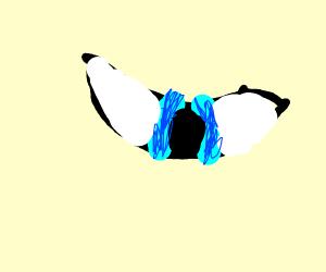 close up of a pretty blue eye