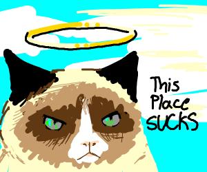 grumpy cat hates heaven