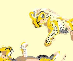 adorable baby cheetah