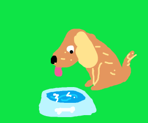 Dog with a dog bowl