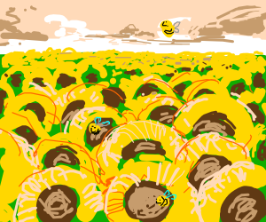 sunflowers & bees