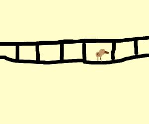 Woodpecker crossing a Bridge