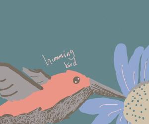 Hummingbird eating