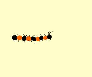 orange and black centipede