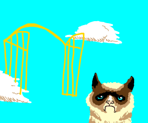 Grumpy cat disapproves of heaven