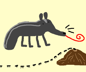 Grey Anteater eating a ant above a ant hill
