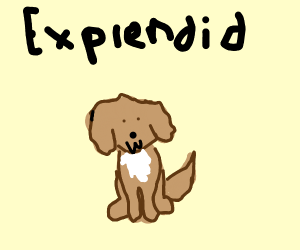 explendid puppy
