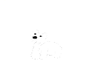 Polar bear in a snowstorm(just nose&eyes)