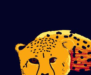 Sad Cheetah.
