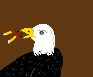 bald eagle vomits pencils
