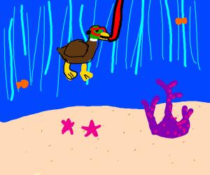 Duck scuba
