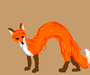 Long slinky fox