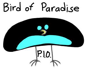 Bird of paradise PIO