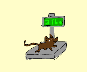 Mouse weighs 2 lbs
