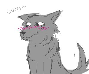 blushing Wolf