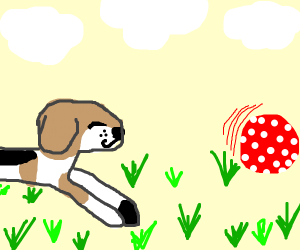 Beagle chasing spotted ball